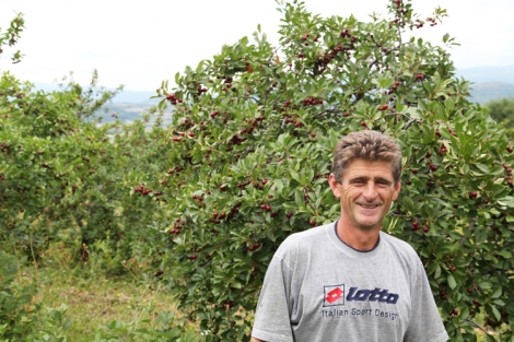 Zoranin viljelmien sato on noin 8000 kiloa kirsikkaa.