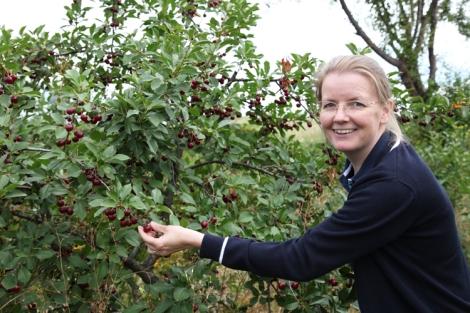 Pienet tummanpunaiset kirsikat maistuivat taivaallisille suoraan puusta poimittuina.